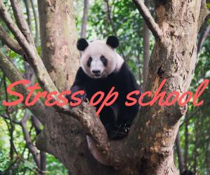 Stress op school